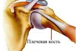 Плечевой сустав картинка-схема